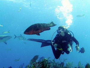 Liveaboard Diving Trip - Komodo Indonesia Photos