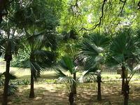Lodhi Gardens