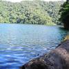 Log By Lake Danao