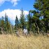 Logging Lake Trail - Glacier - Montana - USA