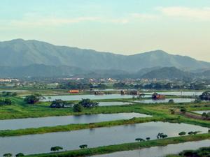 Lok Ma Chau