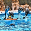 Loro Parque In Tenerife - Canary Islands - Spain