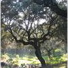 Los Villares Periurban Country Park