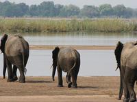 Lower Zambezi National Park