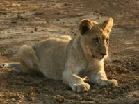 Madikwe Game Reserve