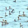 Singanallur Lake