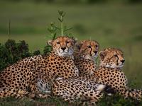 Masai Mara Budget Camping Safari