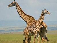 Maasai Mara Adventure 3 Days Photos