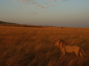 4 Nights 5 Days Maasai Mara Safari Photos