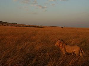 4 Nights 5 Days Maasai Mara Safari Photos