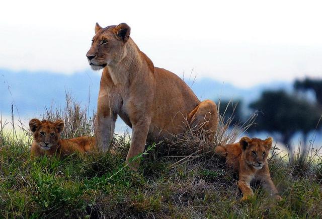 Maasai Mara Trip Photos