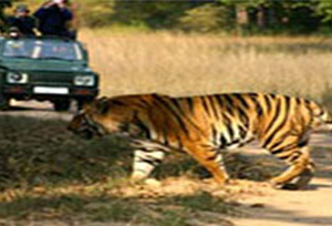Madhav National Park Tiger Safari