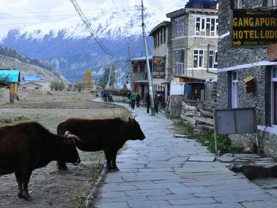 Main Street Of Manang