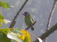 Malabar Wildlife Sanctuary
