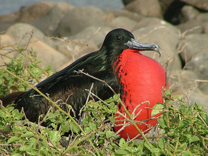 Galapagos Last Minute Cruise Deals & Offers Photos