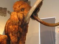 Caffi Natural Science Museum