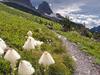 Many Falls Trail - Glacier - Montana - USA
