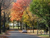 Maplewood  N J During Fall Foliage