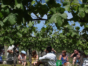 Martinborough Wine-Tasting Tour from Wellington Photos
