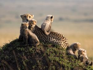 Masai Mara Camping Safari Fotos