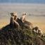 Masai Mara Game Reserve Kenya Africa