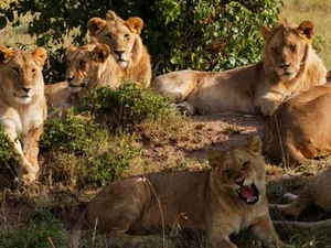 Masai Mara - Wildlife in Action Photos