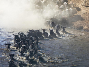 Masai Mara 3 Day Safari - Annual Wildebeest Migration