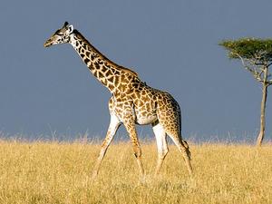 Valentine Offer To Masai Mara Photos