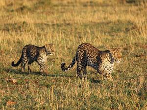 Kenya Wildlife Safari Photos