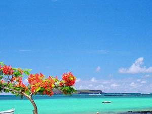 Explore Mauritius @ INR 61999