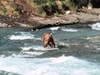 McNeil River Alaska