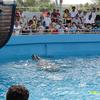 Miami Seaquarium Water Show