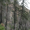 Middle Fork Of Lytle Creek