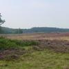 Molenveld Heath