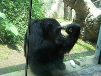 Chapultepec Zoo