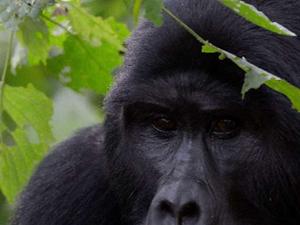 Best of Rwanda Gorilla Trekking Tours