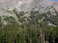 Mount Dana