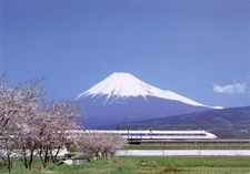 Mount Fuji With A Shinkansen And Cherry Blossoms