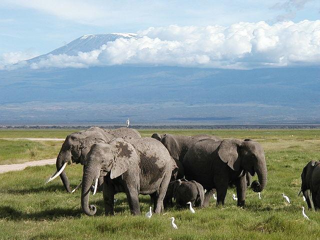 The Shade Of Mount Kilimanjaro Safari Photos