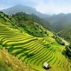 Mu Cang Chai Rice Fields