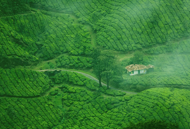 Kerala in a Glance Photos