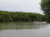Muthupettai Mangrove Forest
