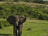 Rubondo Island Safari