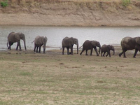 Mweru Wantipa National Park