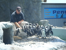 Mystic Aquarium - Penguin Feeding