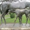 Mare And Foal Of Scone