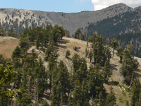 Mount Charleston Wilderness