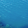 Mount Gambier Blue Lake Closeup