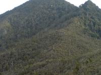 Mount Hobson