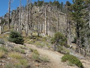 Mount Islip